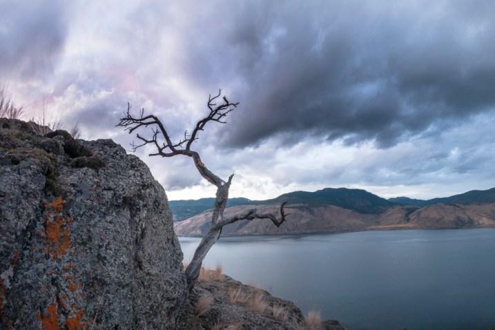tree-on-cliff-2