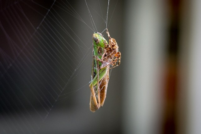 use-your-new-camera-spider-grasshopper