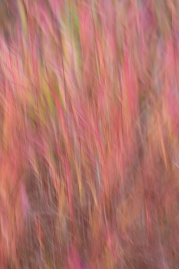 AK-FAI-autumn-blur-abstract-11
