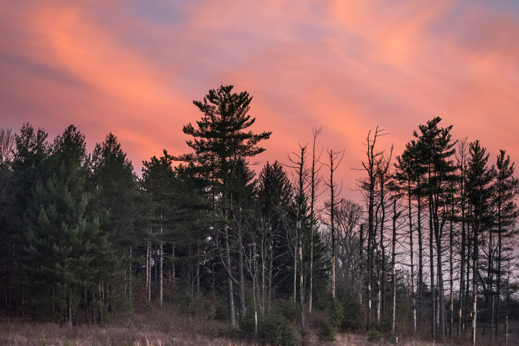 Full frame photo of a forest at sunset
