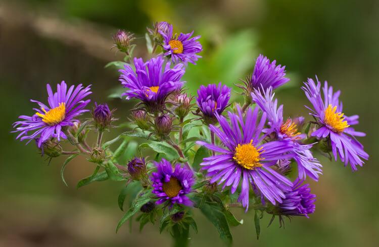 Ao focar, empilhar apenas as flores e deixar o fundo fora de foco faz com que as flores se destaquem na imagem final.