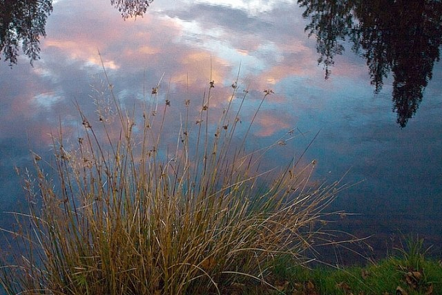 grass by edge of lake Vickie Lewis Photography for dps