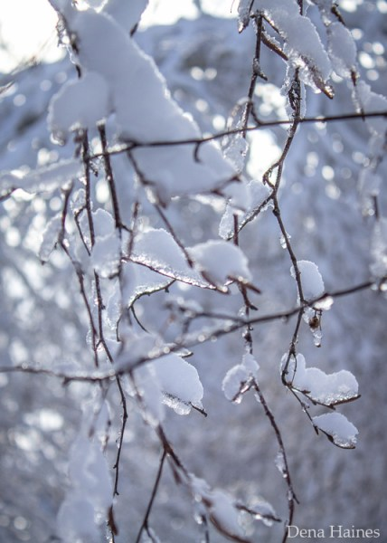 snow photography tips for beginners 2