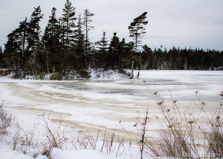 dicas de fotografia de neve para iniciantes