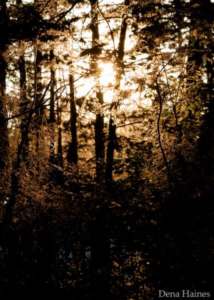 sun-flares-creative-photography-tips