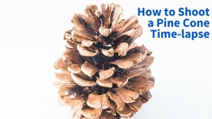 How to Shoot a Pine Cone Time-lapse