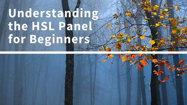 Understanding the HSL Panel in Lightroom for Beginners