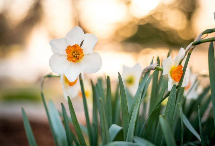 five-tips-brush-tool-white-yellow-flower