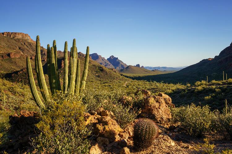 Organ Pipe Cactus National Monument, Arizona