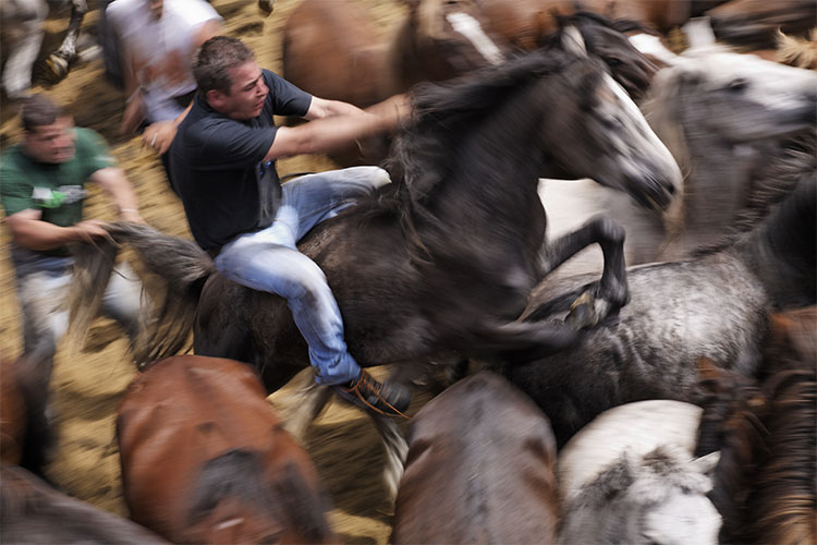 Wild horse roundup ranked 133