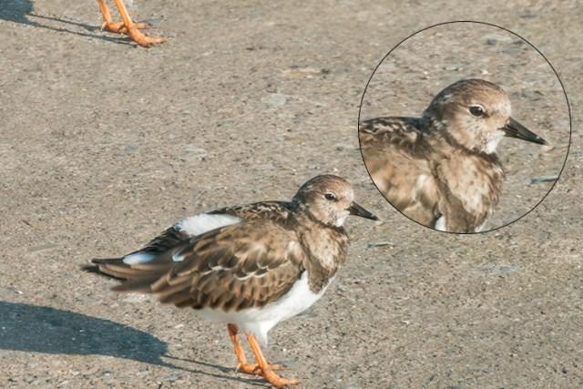 Bird2-duplicated-free-transform