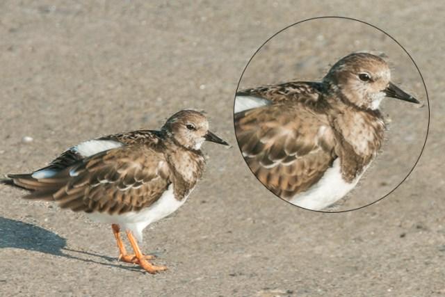 Bird3-duplicated