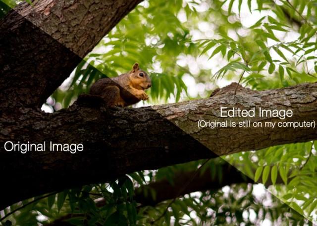 beginners-guide-lightroom-squirrel-comparison