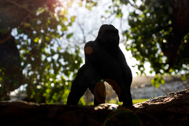 Gorilla-with-lens-flare-and-dust-particles