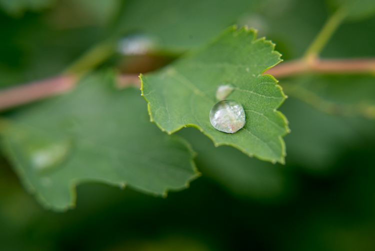 close-up-filters-leaf-droplet