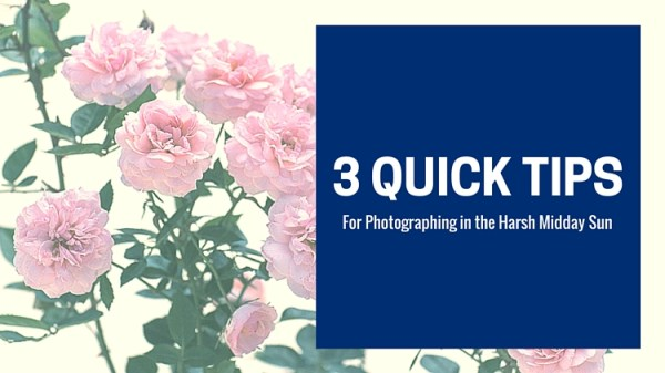 3 Quick Tips for Photographing in the Harsh Midday Sun