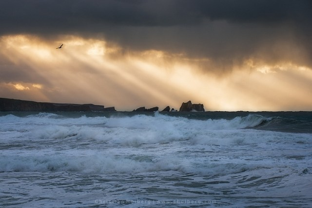 Bird flying through a stormy sunset at Liencres, Cantabria.
