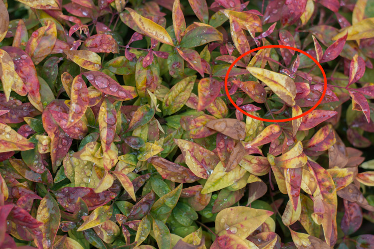 Highlights adjusted to a value of -80. Notice how the yellow leaves, particularly the large one on the right-hand side, now display a much richer shade of yellow and are not as washed-out as in the initial photo.
