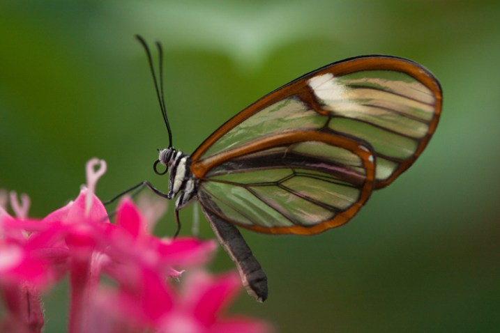 how-to-photograph-butterflies4