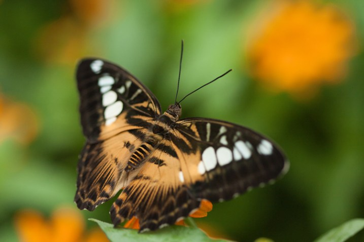 how-to-photograph-butterflies7