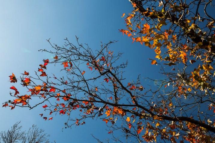 fotografando a natureza na árvore do seu quintal