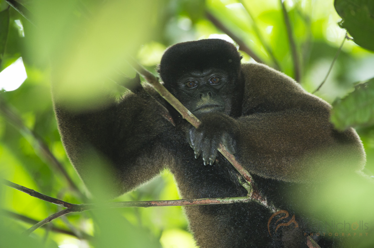 Thanks to a semi-automatic mode, I was ready for action when this woolly monkey surprised me in the Amazon rainforest. Manually mode would have rendered my efforts useless in such a fleeting moment.