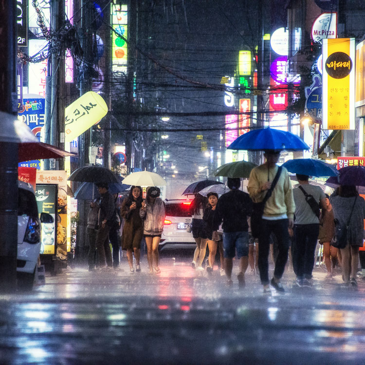 Umbrellas in Busan Rain