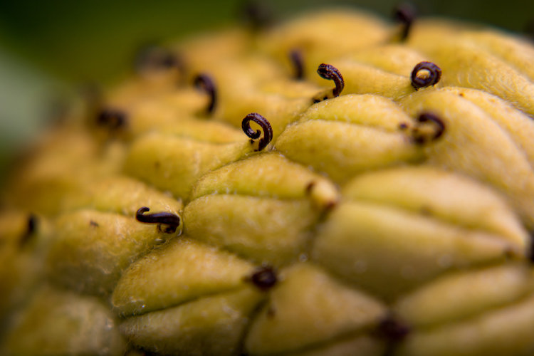 Depth of field can be extraordinarily thin when shooting macro pictures, and using Live View to see a preview of the final result is a good way to get the photo to show up just how you want.