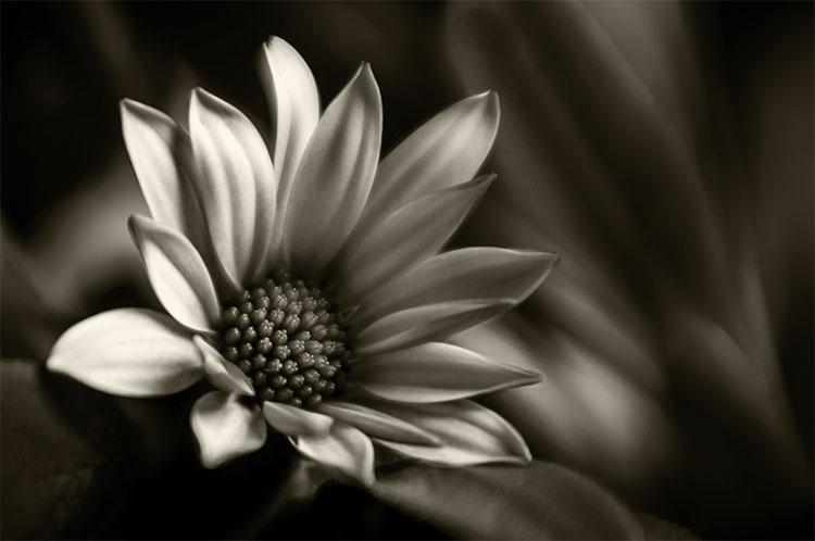 leannecole-lensbaby-macro-flower