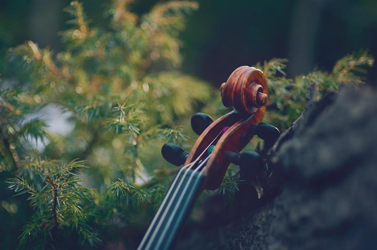 top of a violin