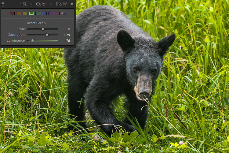How to Expose Correctly for High Contrast Wildlife