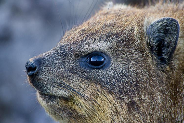 培训方法kavdadfar野生动物摄影