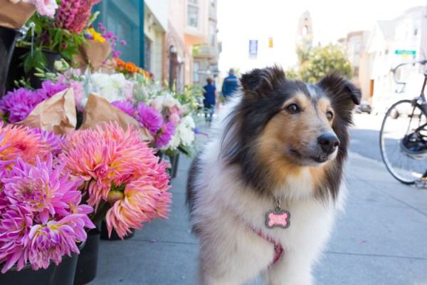 5 Good Reasons to Take Your Dog on Photography Walks