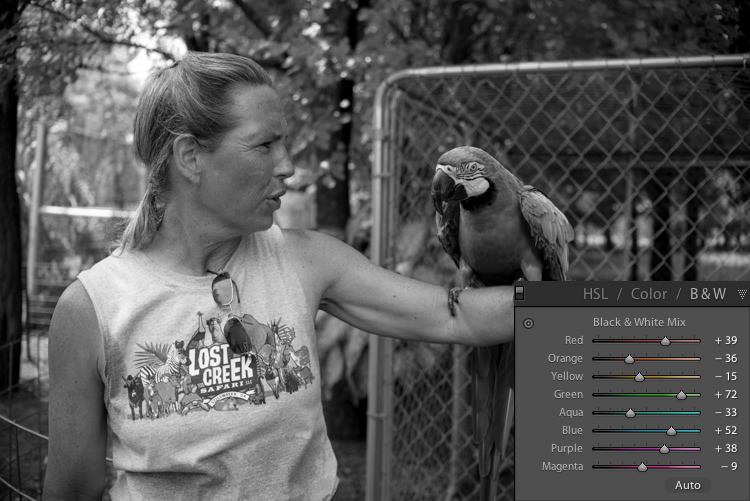 lightroom-adjustments-panel-macaw-bw-all-2