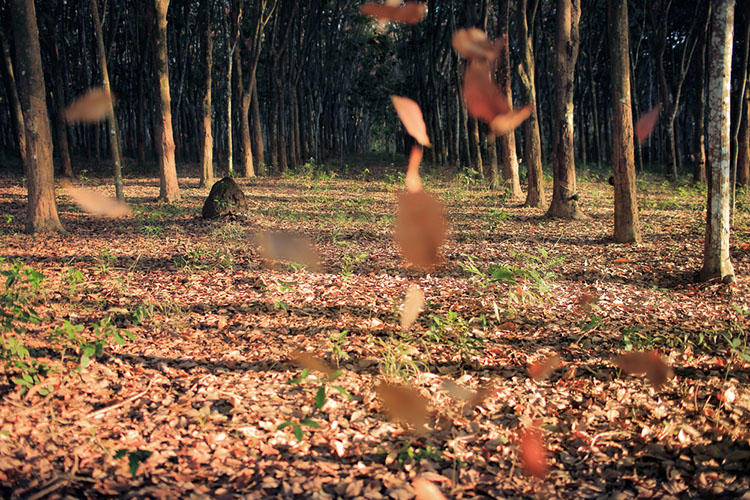 Motion fall photography05