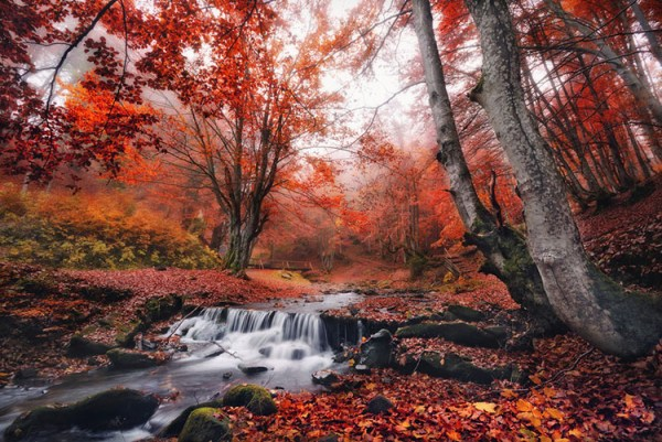 Add Motion to Your Fall Photography to Help it Stand Out