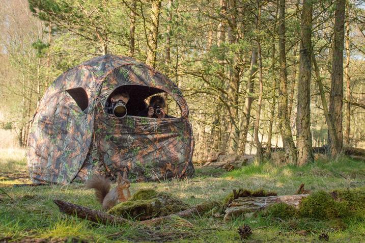 野生动物摄影