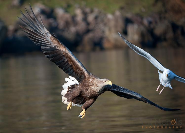 action-wildlife-photos-5