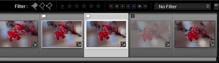 Once you mark your images as Flagged or Rejected, use the filter icons to choose which photos to display.