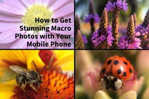 How to Get Stunning Macro Photos with Your Mobile Phone