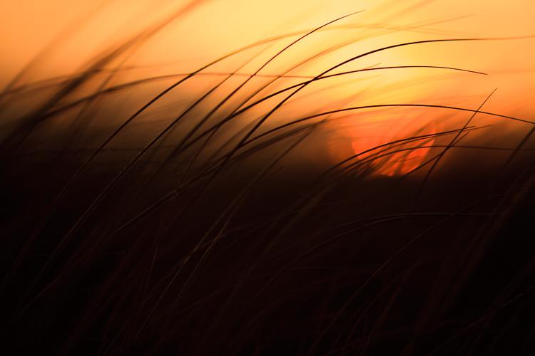 atirando na grama ao pôr do sol