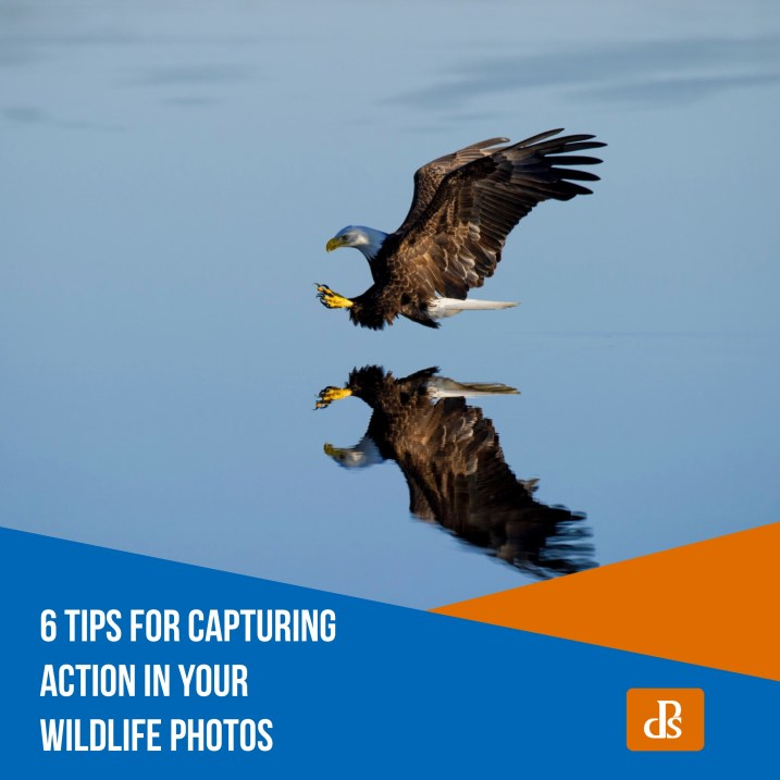 6 Tips for Capturing Action in Your Wildlife Photos