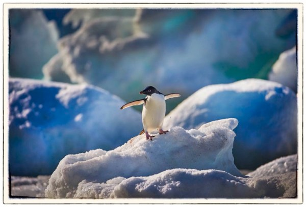 The Magic of Antarctica with Special Guest Peter Eastway