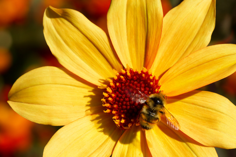 Yellow flower with bee by Anne McKinnell - 5 Common Post-Processing Mistakes to Avoid