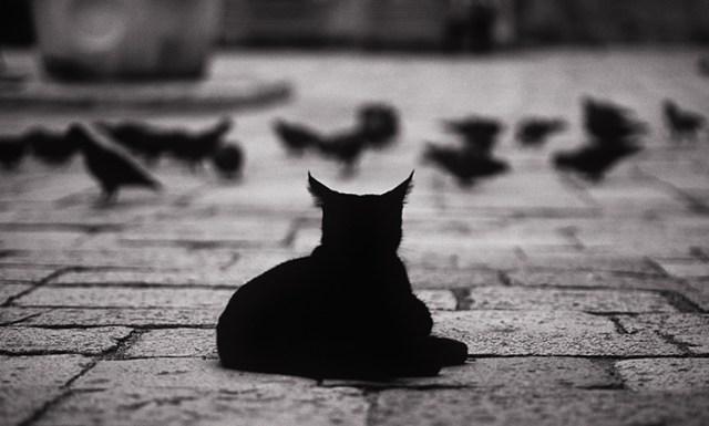 Tips photos cats 03