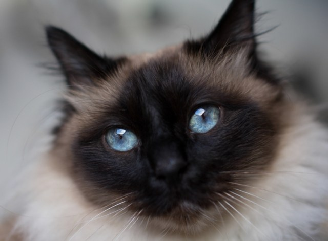 Tips photos cats 10
