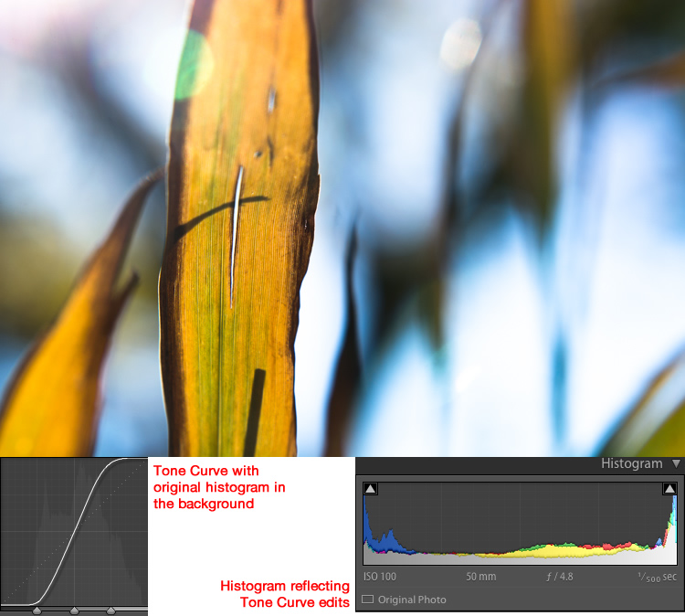 How to Understand the Lightroom Tone Curve