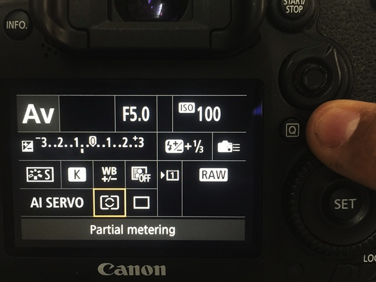 Bird Photography camera Settings for Beginners