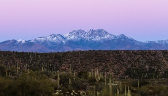Arizona, Tonto National Forest, cactus, saguaro, mountain, peaks, snow, pink, dust, sunset, landscape