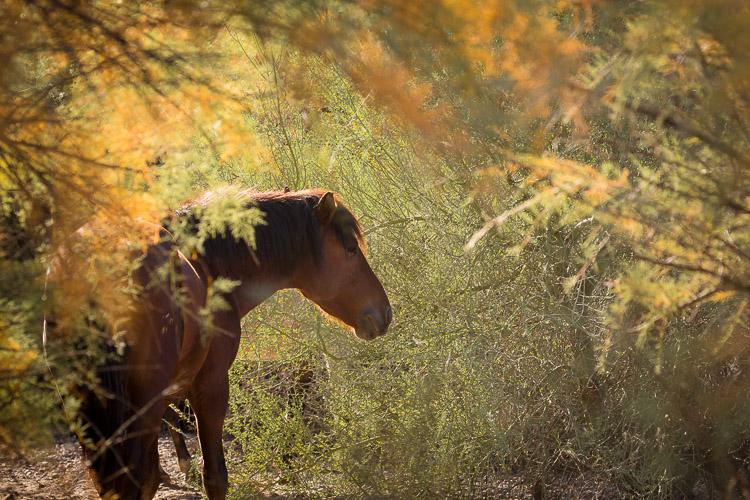 How to Plan a DIY Photography Retreat - Salt River stallion